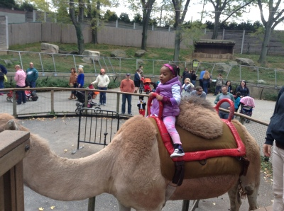 Quinn Riding a Camel at the Zoo